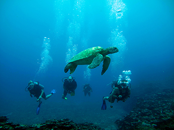 Green Turtle Pacific Divers Rarotonga